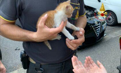 Gattino si nasconde nel vano motore di una macchina ma non riesce più a uscire