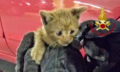 Gattino nascosto nel vano motore dell'auto, grazie allo smartphone sono riusciti a farlo uscire