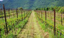 International Wine Challenge, premio speciale per l'Amarone Della Valpolicella Classico Riserva 2012 di Santa Sofia
