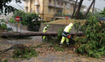 Maltempo sull'Alto Garda ed Este Veronese: fiumi di fango e alberi abbattuti