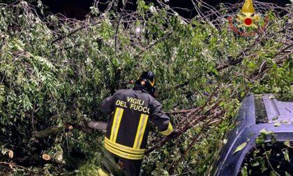 Maltempo a Verona: alberi caduti ed edifici pericolanti, 81 interventi dei Vigili del Fuoco