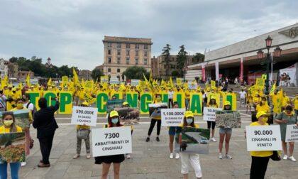 Città e campagne veronesi invase dai cinghiali: flash mob a Venezia