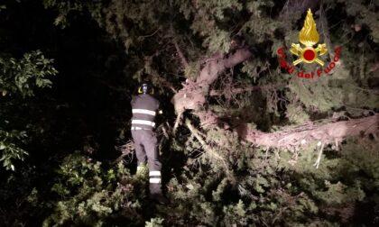 Maltempo abbatte degli alberi: feriti due motociclisti, uno è grave