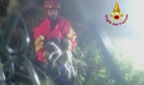 Laki scivola per circa 4 metri nel canale: cagnolino salvato dai pompieri