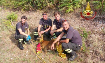 Le foto del giovane capriolo salvato dai pompieri dopo essere caduto in acqua
