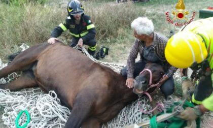 Donna scivola col suo cavallo nella scarpata, le immagini dei soccorsi