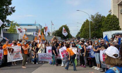 Sperimentazione sui Beagle a Verona, associazioni chiedono al Comune l'accesso agli atti