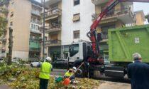 """Taglio alberi in Via Todeschini, Sboarina: """"Perizie con il grado più alto di pericolosità"""""""