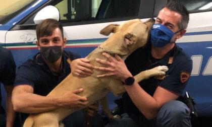 Picchia il proprio cane con un bastone: la Polizia interviene e salva il pitbull